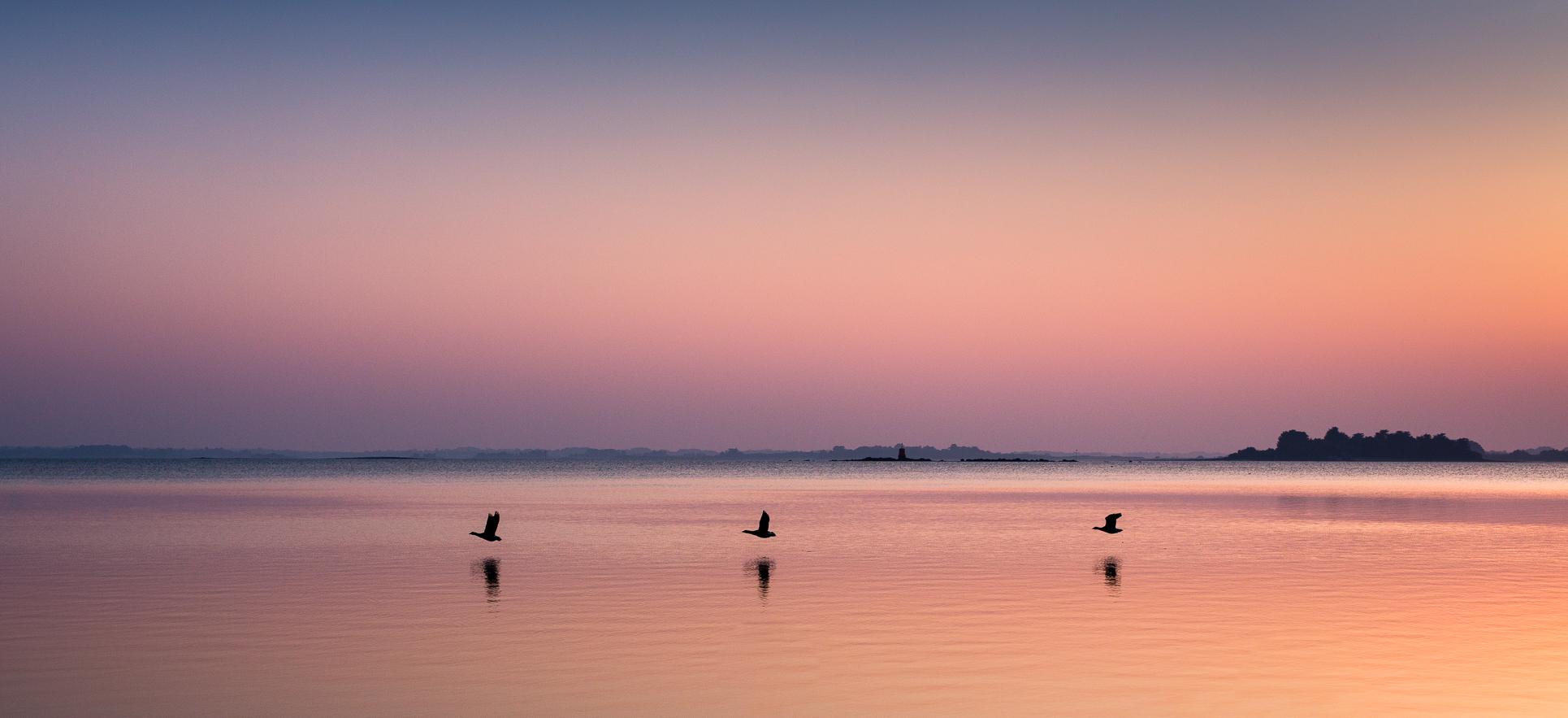 Séné – Golfe du Morbihan – 2018 @ Christelle Hachet Photographie